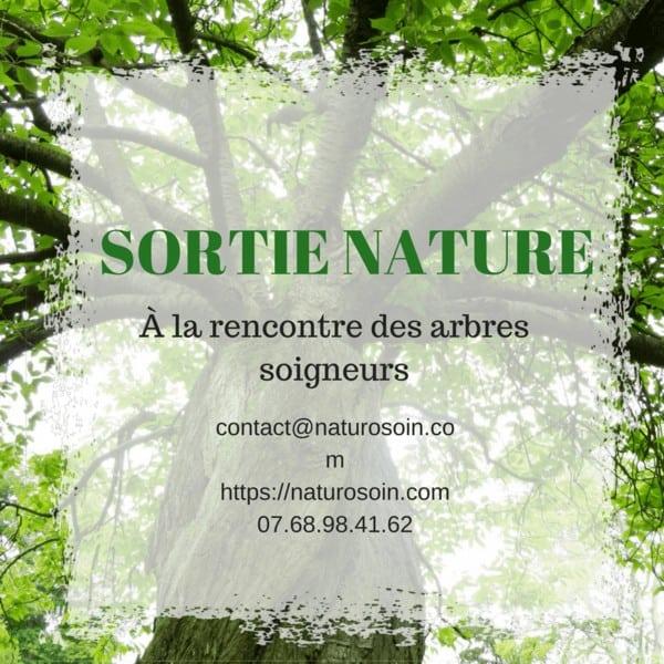 arbres soigneurs sylvothérapie naturopathie angouleme