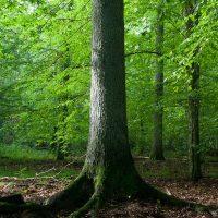 clement tisseuil naturopathe sylvothérapie